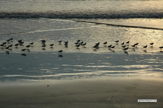 Birds on Beach